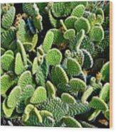 Field Of Cactus Paddles Wood Print