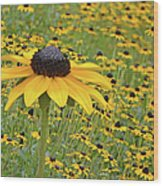 Field Of Coneflowers Wood Print