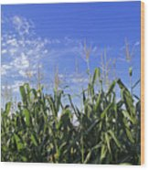 Field Of Corn Against A Clear Blue Sky Wood Print