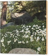 Field Of Daisies In Tahoe Wood Print