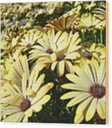 Field Of Daisies Landscape Floral Art Prints Daisy Baslee Troutman Wood Print