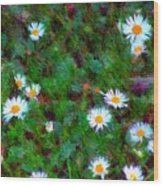 Field Of Daisys  Wood Print