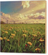 Field Of Dandelions At Sunset Wood Print