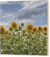 Field Of Dreams Panorama Wood Print