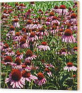 Field Of Echinacea Wood Print