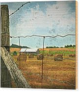 Field Of Freshly Cut Bales Of Hay Wood Print