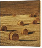Field Of Gold #1 Wood Print