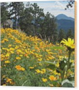 Field Of Golden  Poppies Wood Print