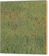 Field Of Hope Wood Print