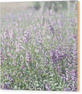 Field Of Lavender Flowers Wood Print