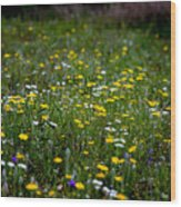 Field Of Mixed Flowers Wood Print