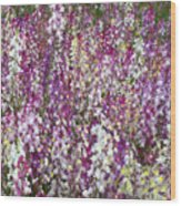 Field Of Multi-colored Flowers Wood Print