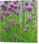 Field Of Onions  Wood Print