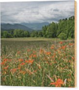 Field Of Orange Daylilies Wood Print
