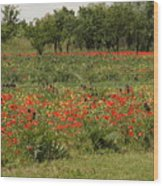 Field Of Poppies On Torcello In Venice Wood Print