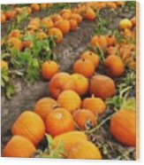 Field Of Pumpkins Card Wood Print