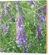 Field Of Purple Dreams Wood Print by D R TeesT