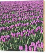 Field Of Purple Flowers Wood Print