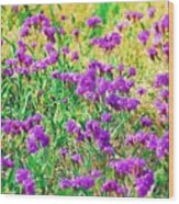 Field Of Purple Flowers Wood Print