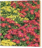 Field Of Red And Yellow Flowers Wood Print