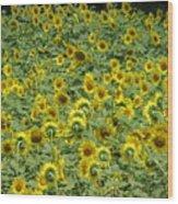 Field Of Sun Wood Print