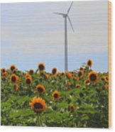 Where The Sunflowers Shine Wood Print