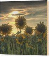 Field Of Sunflowers Wood Print