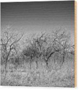 Field Of Trees Wood Print