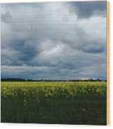 Field Of Weeds Wood Print