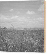 Field Of Wheat Wood Print