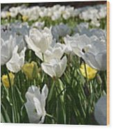 Field Of White Tulips Wood Print