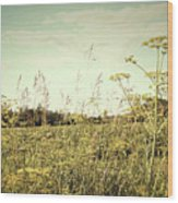 Field Of Wild Dill In The Afternoon Sun  Wood Print by Sandra Cunningham