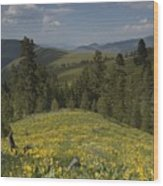 Field Of Yellow Flowers Wood Print