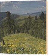 Field Of Yellow Flowers Wood Print