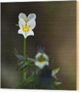 Field Pansy Wood Print