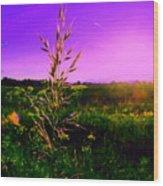 Field Rye And Ear Wood Print