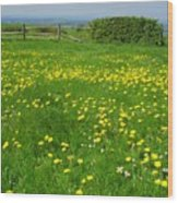 Field With Yellow Flowers Wood Print