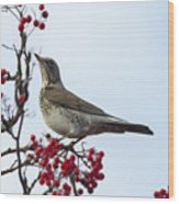 Fieldfare - 2 Wood Print