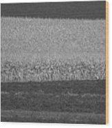 Fields Near Madison Wood Print