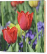 Fields Of Beauty 72 Wood Print