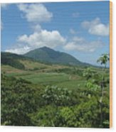 St. Kitts Fields Of Cane Wood Print