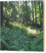 Fields Of Ferns Wood Print