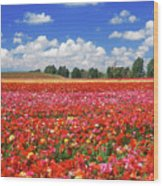 Fields Of Flowers At Nir Banim Wood Print