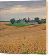 Fields Of Gold, Illinois Wood Print