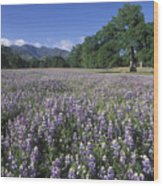 Fields Of Lupine And Owl Clover Wood Print