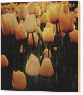 Fields Of Yellow Tulips Wood Print