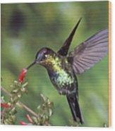 Fiery-throated Hummingbird Panterpe Wood Print