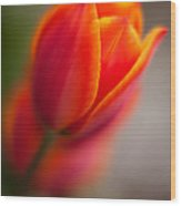 Fiery Tulip Wood Print