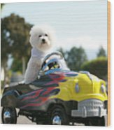 Fifi Goes For A Car Ride Wood Print