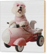 Fifi Is Ready For Take Off  Wood Print by Michael Ledray